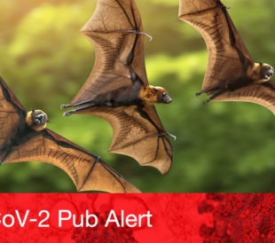 Three brown bats fly across a blurry background of trees, representing the study of novel coronaviruses in bats