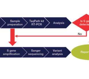 Workflow for Sanger sequencing detection of S gene variants