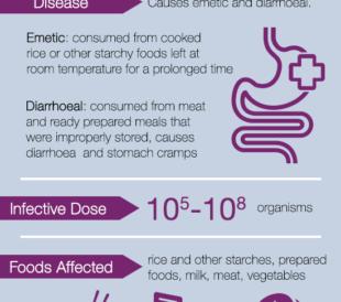 Bacillus cereus Fact Sheet Infographic