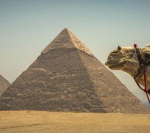 ancient Egypt camel