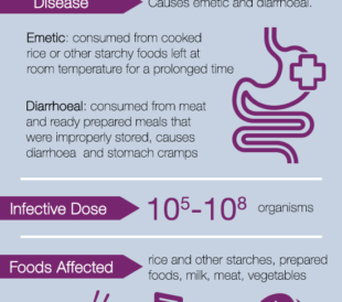 Bacillus cereus Fact Sheet Infographic