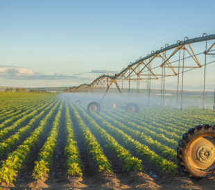 Potato field being irrigated
