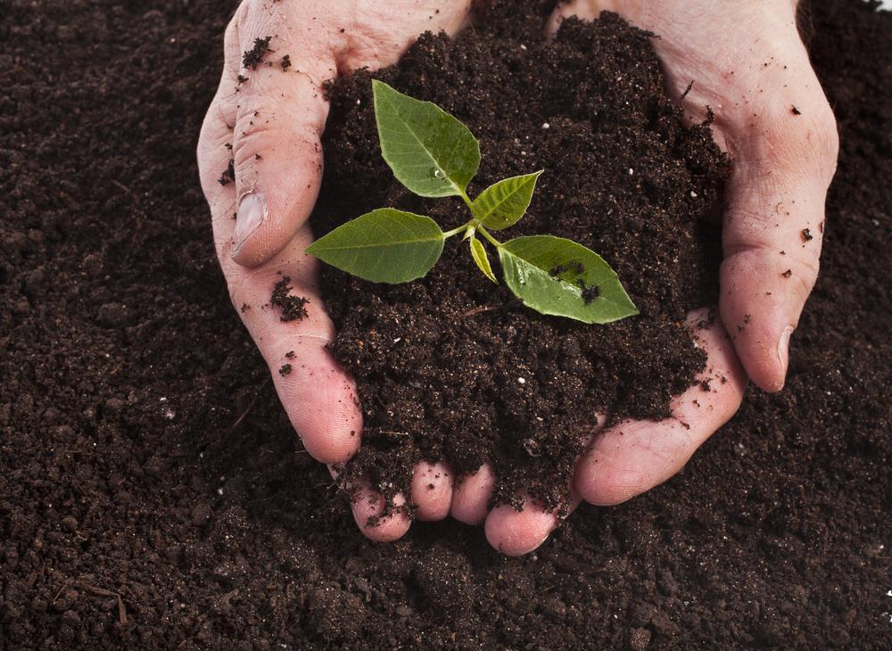 Selenium soil plant