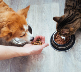 Manufacturing Pet Food to People Food Standards