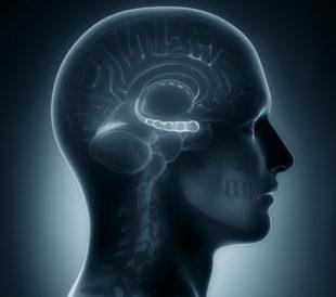 Male hippocampus. Image: CLIPAREA l Custom media/Shutterstock.com