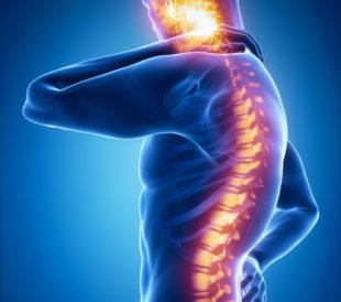 Artist illustration of spinal cord. Image: CLIPAREA l Custom media/Shutterstock.com