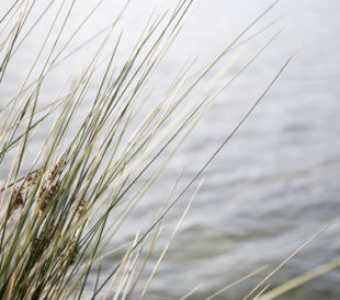 River bank with grass. Image: James Cox/Shutterstock.com