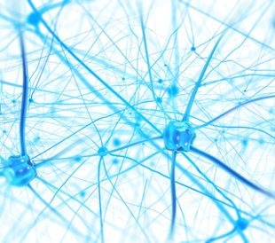 Neurons in the brain on white background. Image: Andrii Vodolazhskyi/Shutterstock.com.